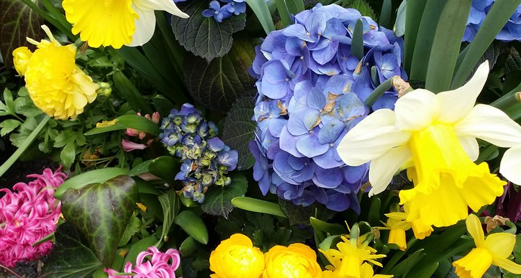 Spring flowers can cause allergic conditions due to Increased pollen count levels in the air