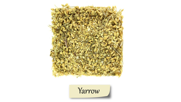Yarrow can have many health benefits.