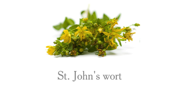 Herbal Medicine showing St. John's wort.