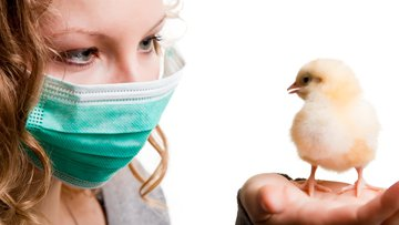 Bird flu infection can cause epidemics.