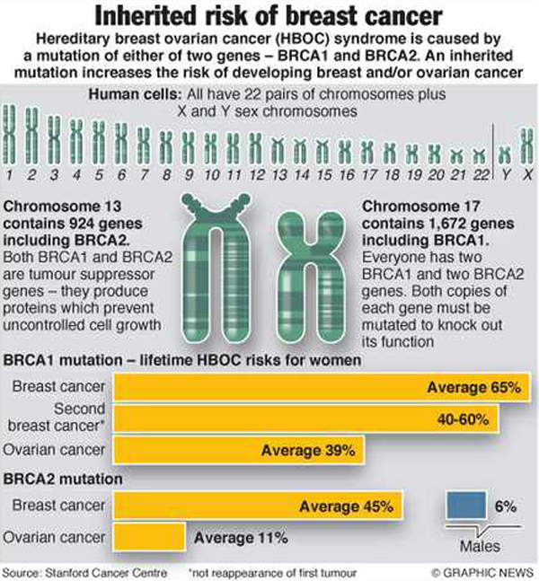 genetics screening for the brca1 and Charges for commercially available genetic screening for brca1 and 2 mutations are approximately $2,600 genetic counseling at a specialty cancer center can add several hundred more dollars to the cost counseling before the test, waiting for the results and.