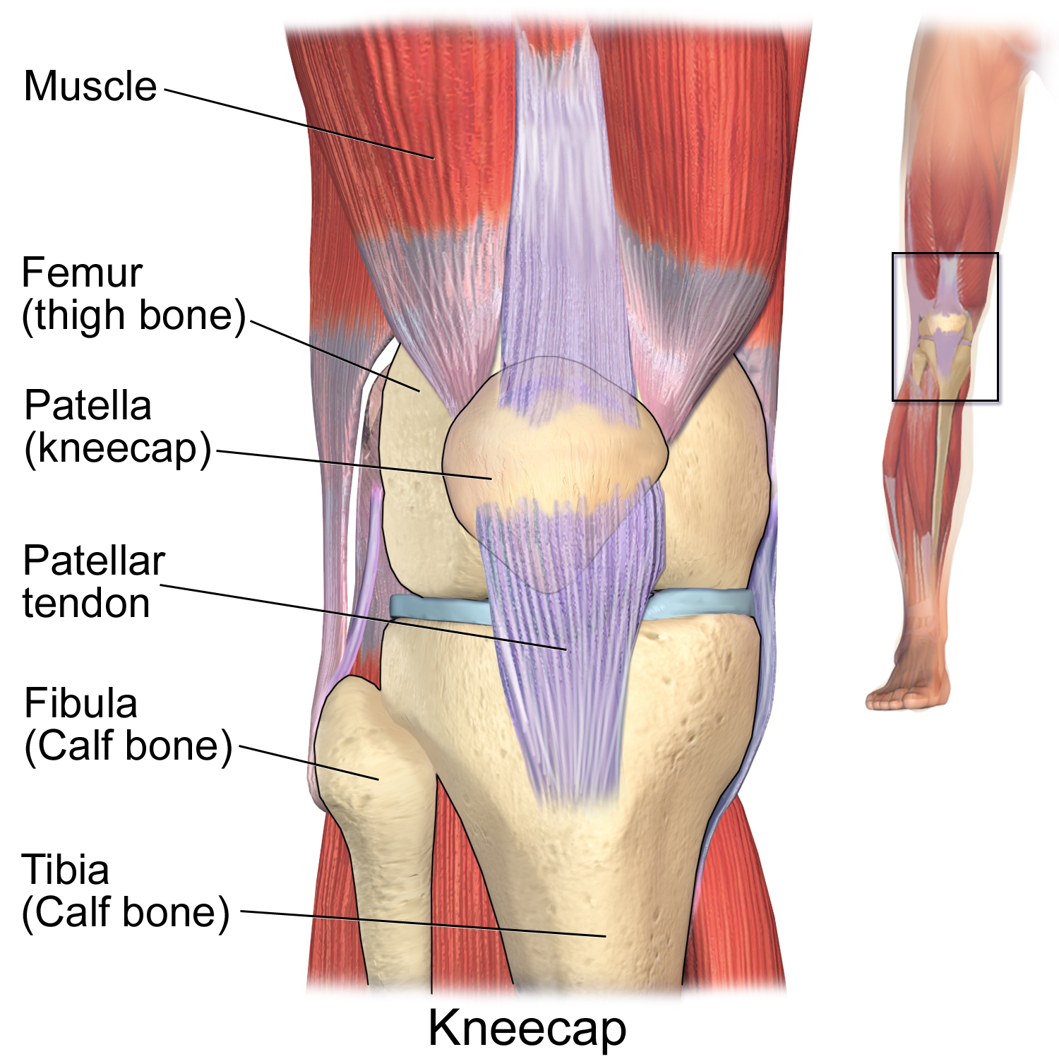 First Aid For Kneecap Dislocation