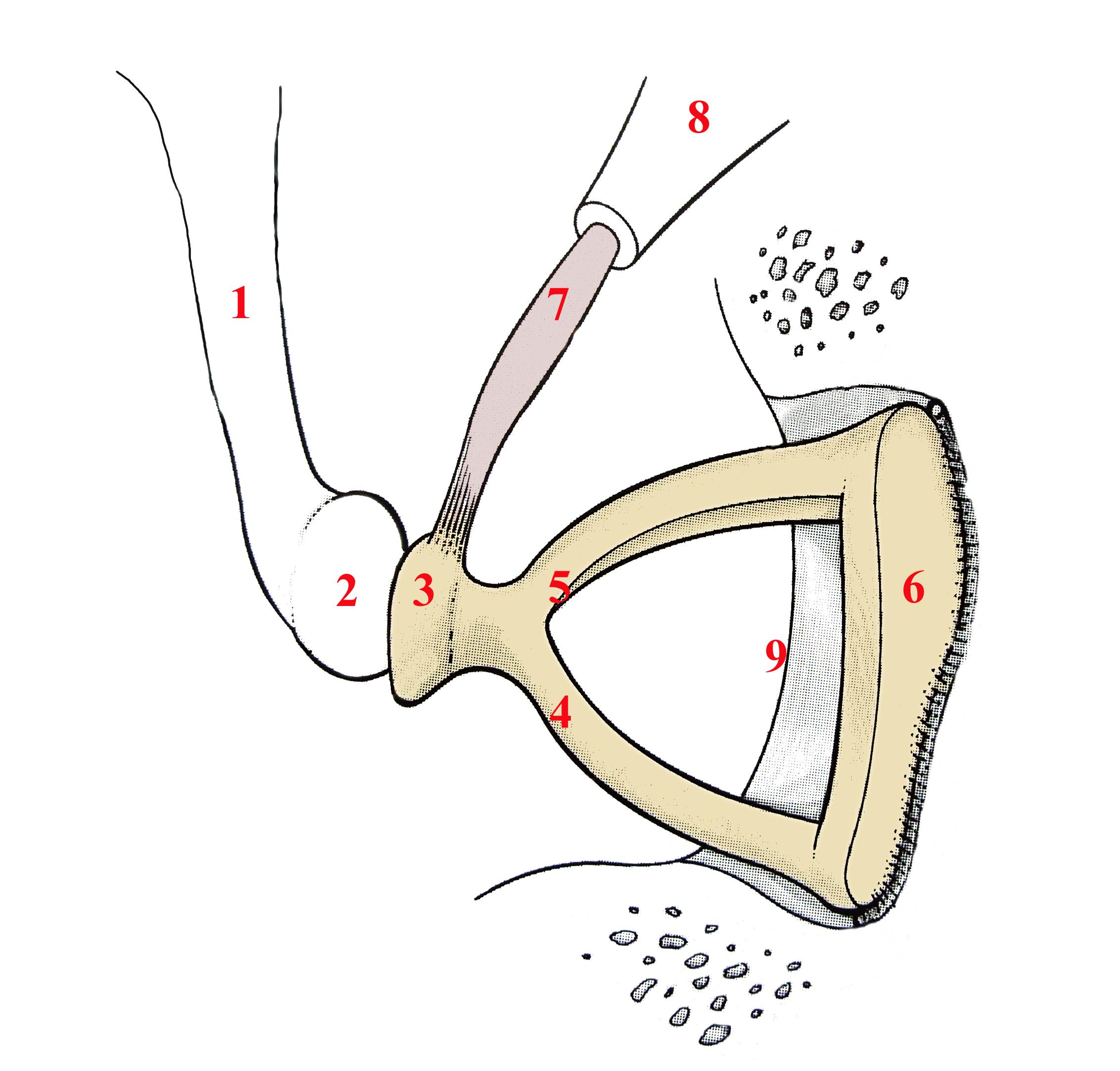 Stapedectomy