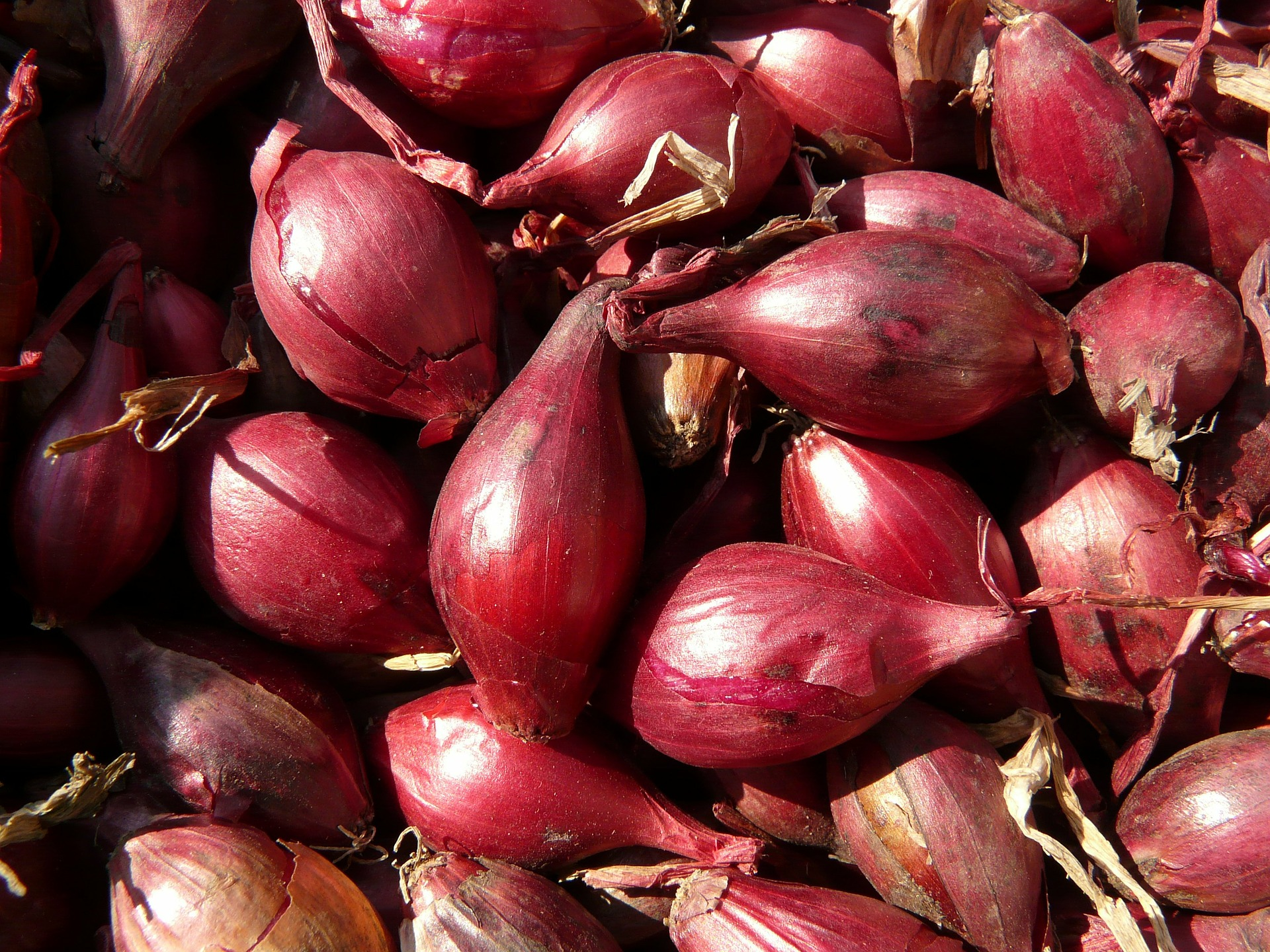 7 health benefits of shallot