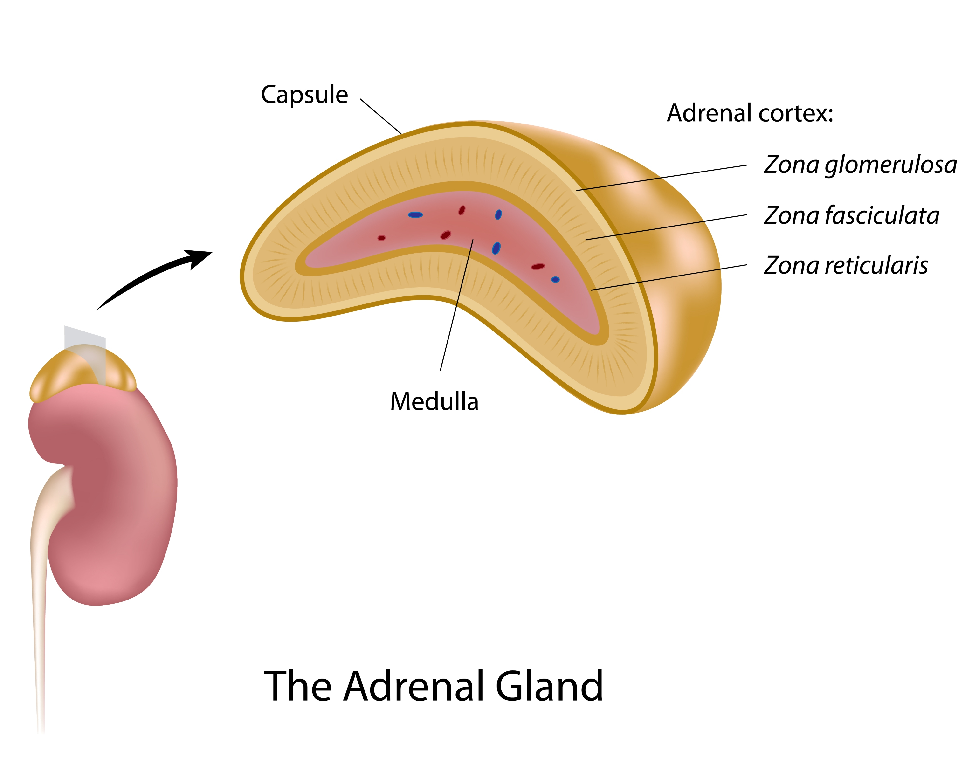 Adrenal Gland Removal